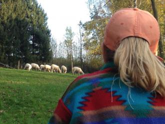 BodyTalk für Tiere - Schafe